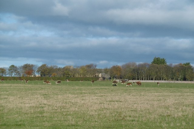 Herefords, Bonnington