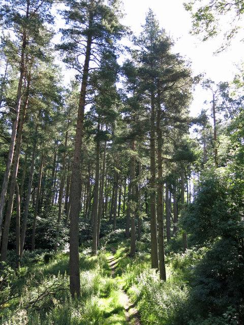 Snaisgill Plantation