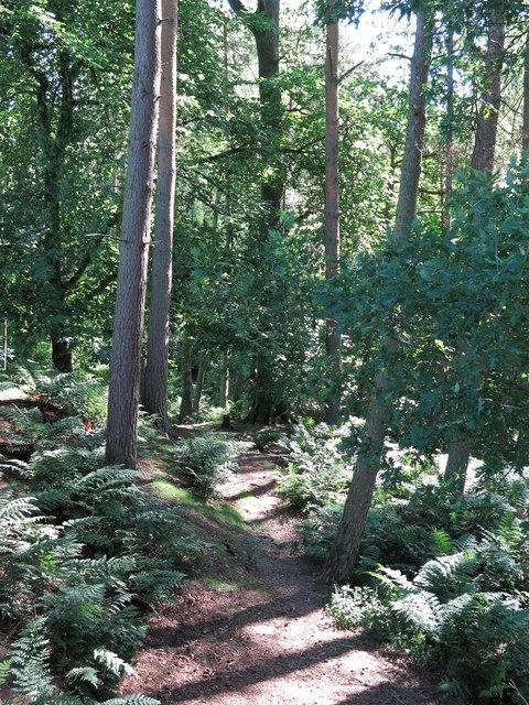 Path in Snaisgill Plantation above Snaisgill Sike