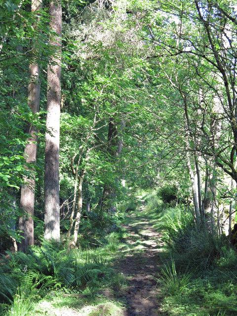 Path on the edge of Snaisgill Plantation