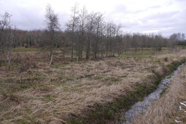 Young woodland, Cambushinnie