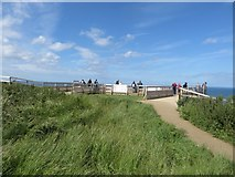 TA1974 : Viewing area, RSPB Bempton Cliffs by Graham Robson