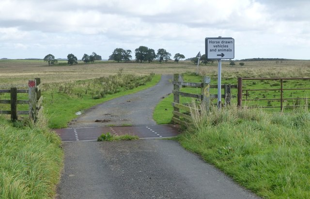 Cattle grid on minor road
