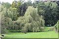ST0972 : Weeping willow, Dyffryn gardens by M J Roscoe