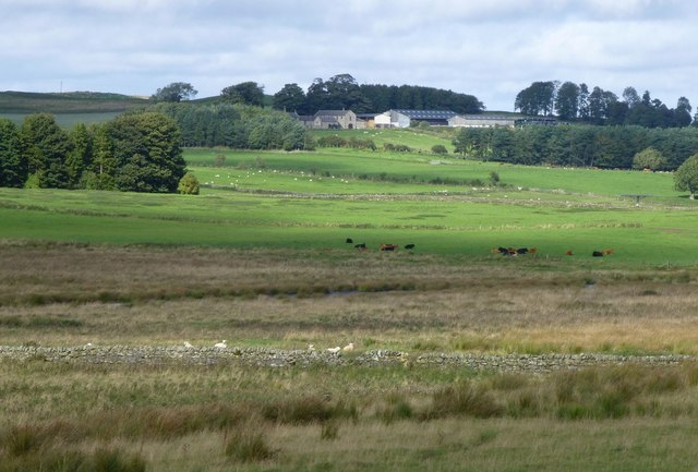 Sheep and cattle in rough pasture