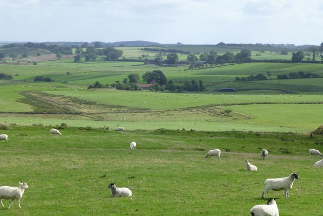 Looking down from Bavington Crags
