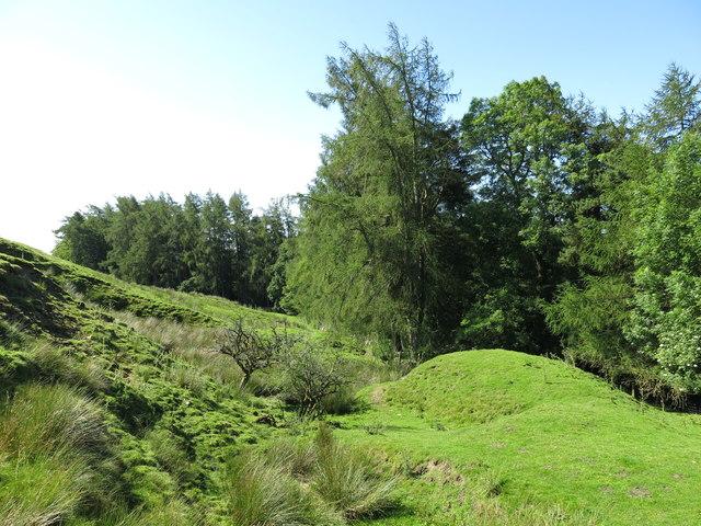 Field on the east side of Skears Plantation