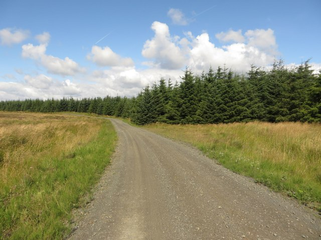 Forest track, Wark Forest