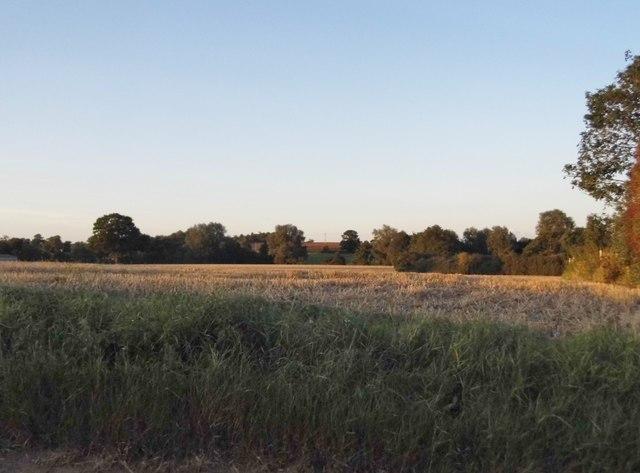 Field by Bell Lane, Great Bardfield