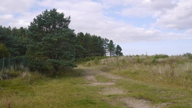 Path, Tentsmuir Forest