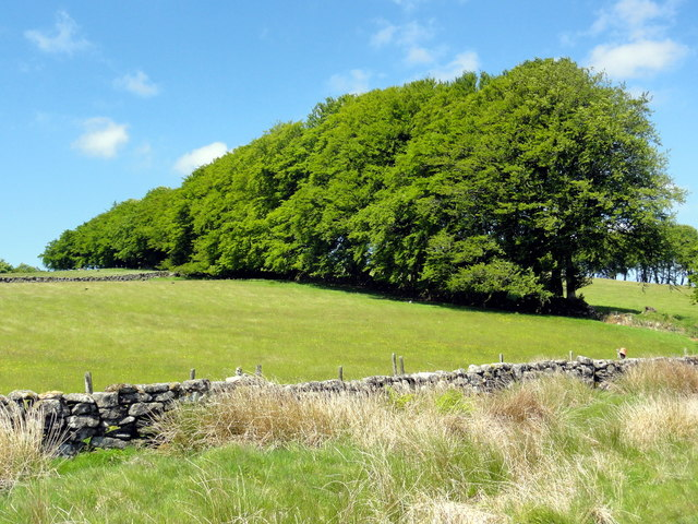 Tree-lined Field Boundary