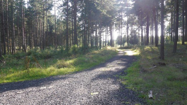 Road, Tentsmuir Forest
