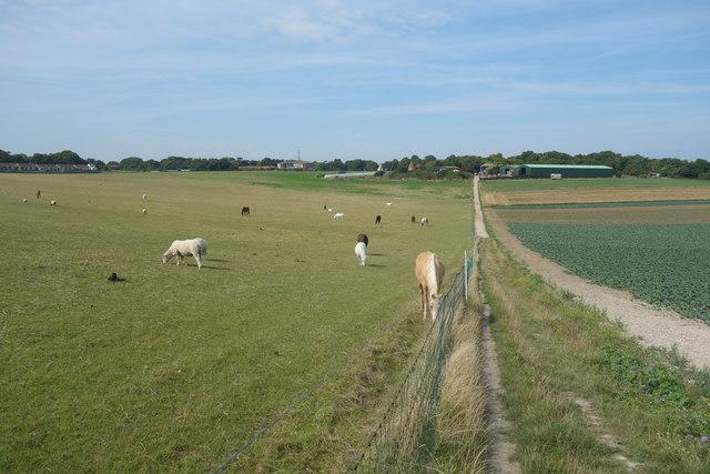 Footpath towards Elmwood Farm