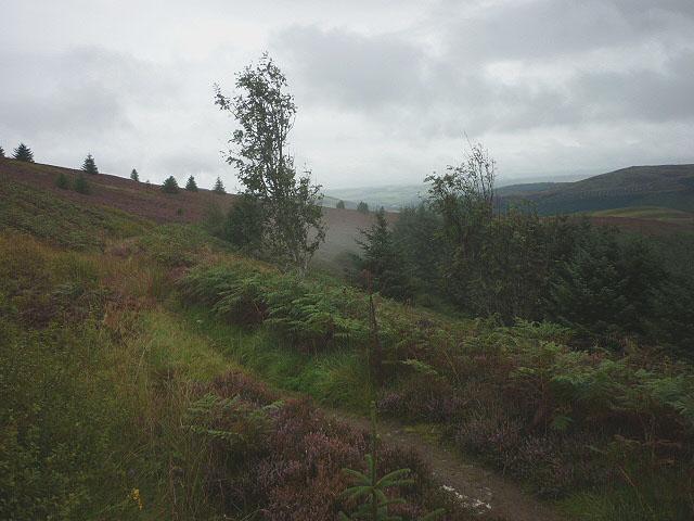 The Minchmoor Road on Brown Knowe