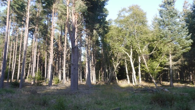 Tentsmuir Forest