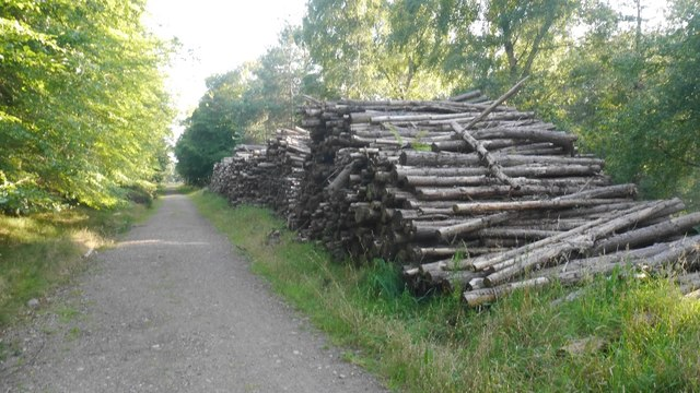 Log piles, Tentsmuir Forest