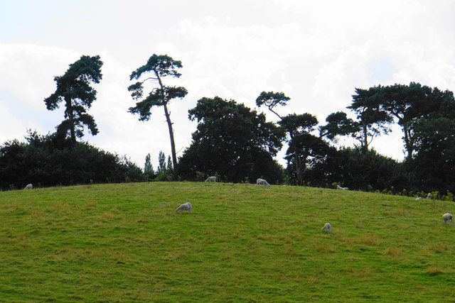 Hilltop sheep near Stonyford