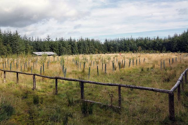 The Forest Pitch at Clarilawmuir Plantation near Selkirk