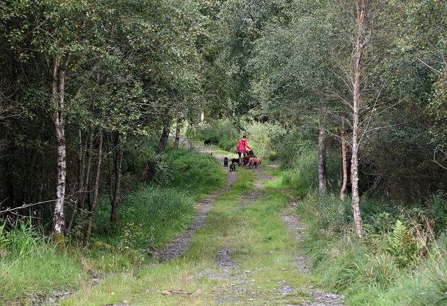 A track in Clarilawmuir Plantation