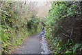 SX4662 : Tamar Valley Discovery Trail by N Chadwick