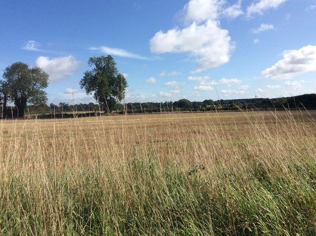 Farmland Slip End