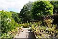 SJ5770 : Garden centre at Stonyford Cottage by Bill Boaden