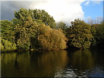 TQ2979 : Trees by St James Park Lake by Paul Gillett