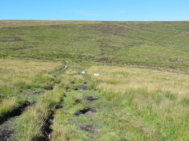 Rough Moorland Grass, Sheep and a Track