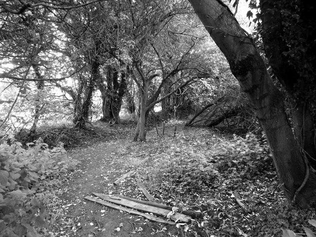 Path near Whitley Farm