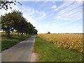 SE9951 : Trees alongside Burnbutts Lane by Stephen Craven