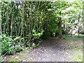 TQ5621 : Path in Darch's  Wood by PAUL FARMER