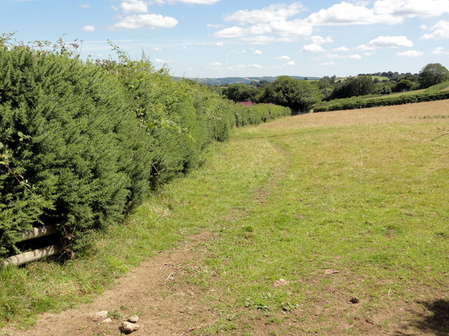 Pasture Field and Gorse Hedge