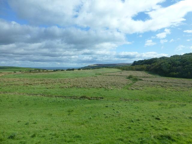 Marshy ground at Evan Howe Plantations