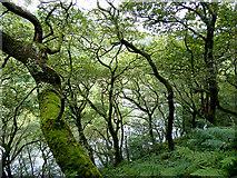 SN7079 : Afon Rheidol glimpsed through the trees by John Lucas