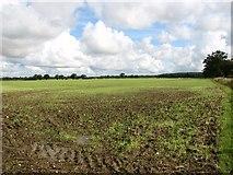 TG1301 : Crop fields by Browick Bottom Farm by Evelyn Simak