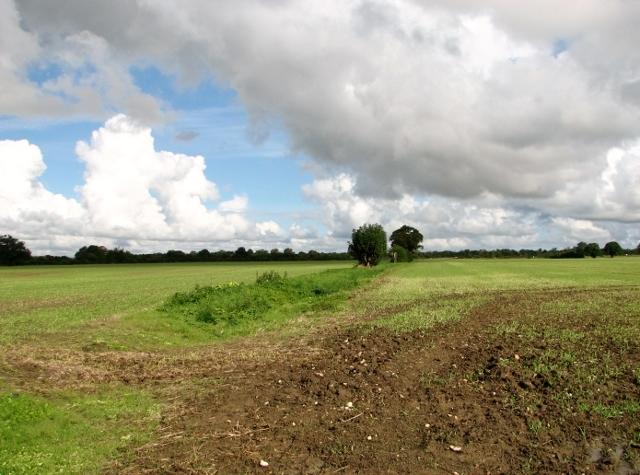 Field boundary north of Ketteringham Road