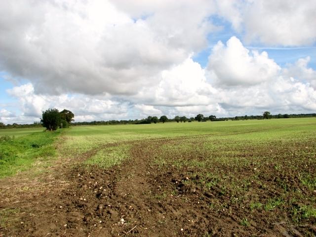 Cereal crop north of Ketteringham Road