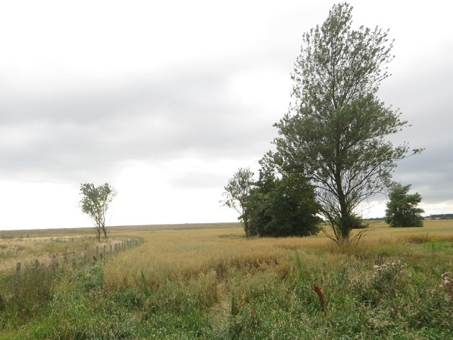 Arable field on restored opencast land