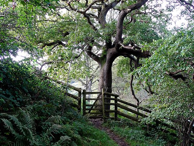 Gate on the path from Aberffrwd to Gamlyn
