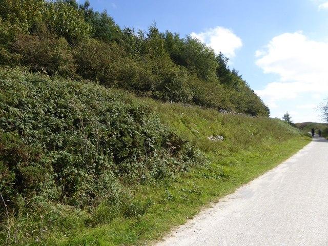 Woodland near Cotesfield Farm
