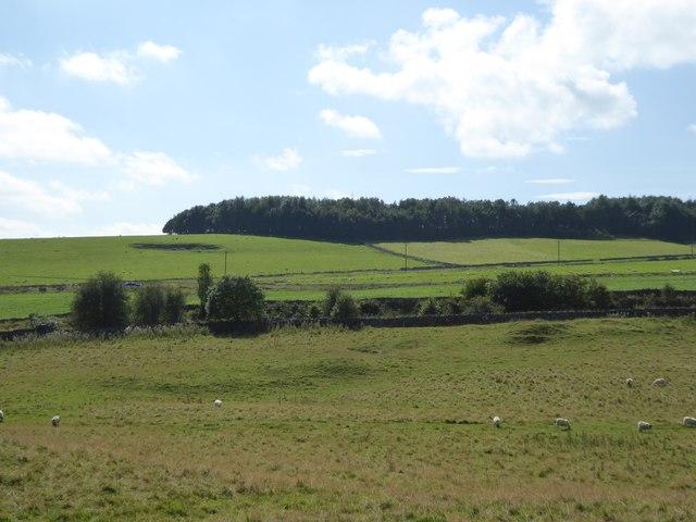 Hummocks in field beside the Tissington Trail