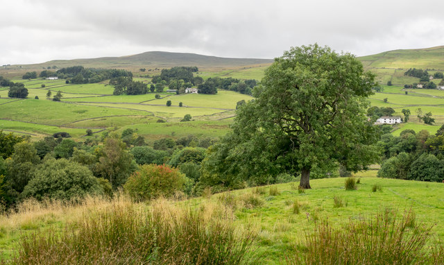 Slope with prominent tree above valley of South Tyne
