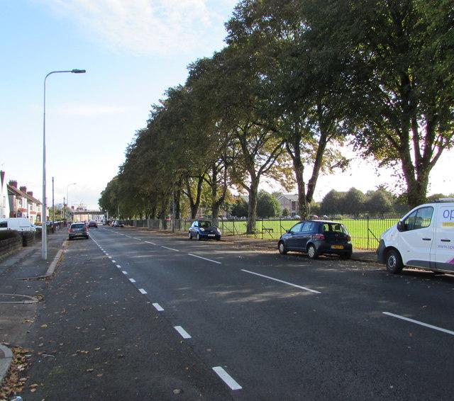 Tree-lined side of Virgil Street, Cardiff