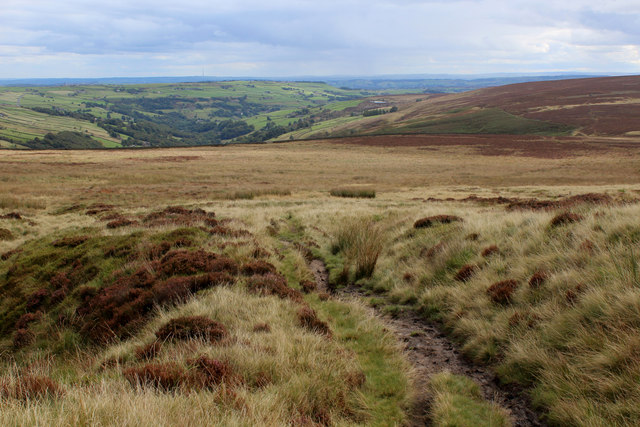 On Low Brown Knoll