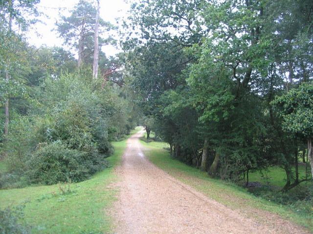 Track southwards towards Ladycross Lodge