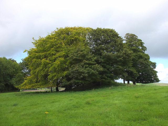 Long Barrow on Arn Hill Down
