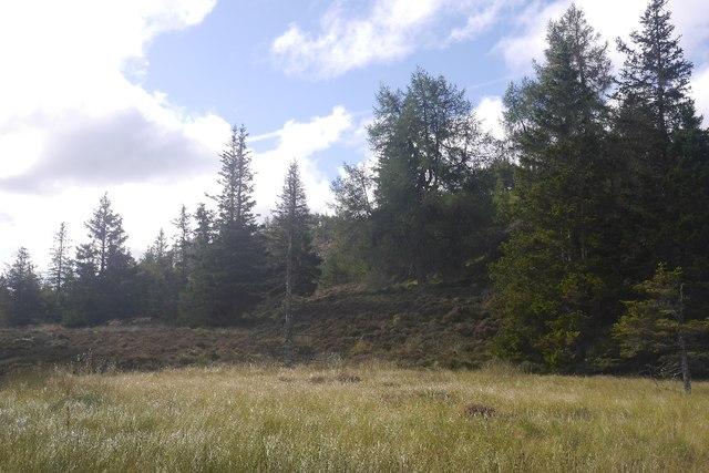 Woodland beneath Capel Hill