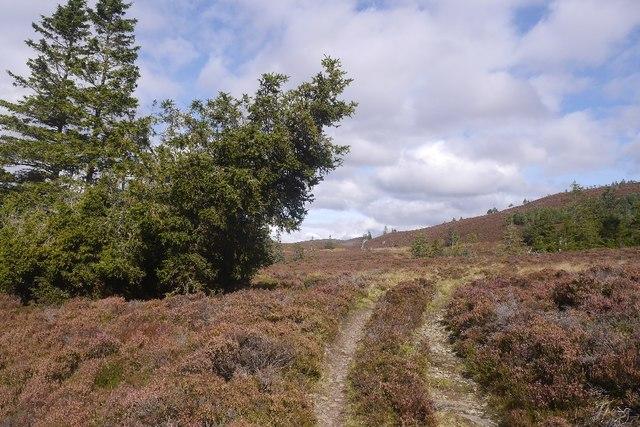 Track to Lochan Oisinneach Mòr