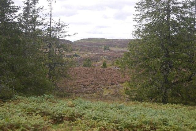 Lochordie Wood