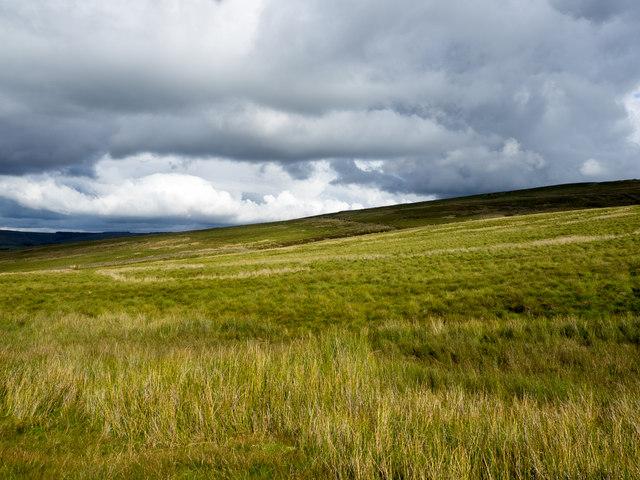 Grassy moorland of Park Fell
